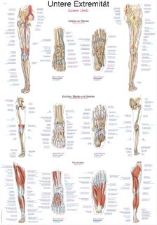 Chart Lower Limb | 70 x 100 cm | plastic