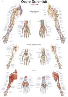 Chart Upper Limb | 70 x 100 cm | laminated