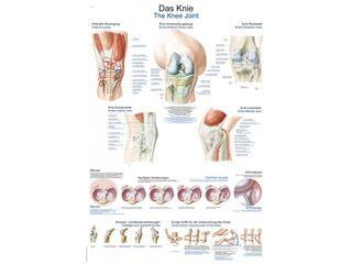 The Knee Chart | 70 x 100 cm | plastic