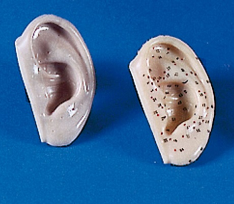 Acupuncture ears | 2 pieces