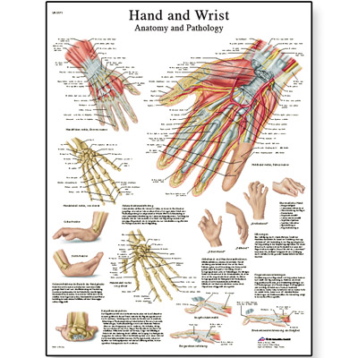 Hand and Wrist chart | 50 x 67 cm | laminated